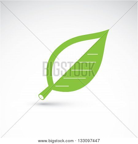Hand-drawn Illustration Of Simple Beech Tree Leaf Isolated. Green Foliage, Spring Herb. Vector Botan
