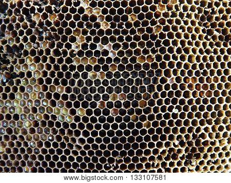Bee honey comb. Detail of beewax.Wild bees.