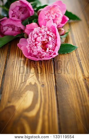 beautiful pink peonies on a wooden table
