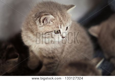 Small cute kitten on couch