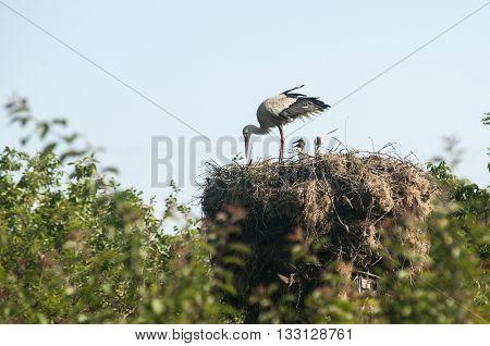 Stork on stork nest done on power pole on blue sky background