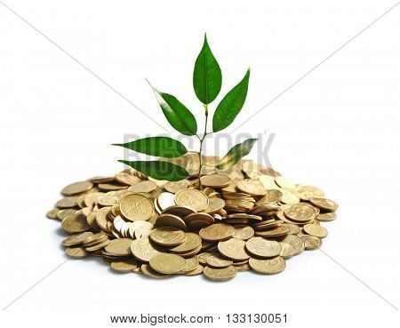 Plant sprouting from a handful of coins
