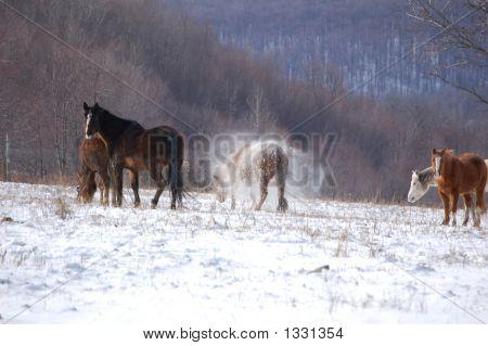 Shaking Horse