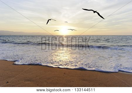 Birds silhouettes is five birds flying toward the bright peaceful sun ocean horizon.