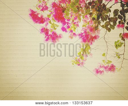 Pink Bougainvillea flower on grey corrugated cardboard textured background vintage filter effect.