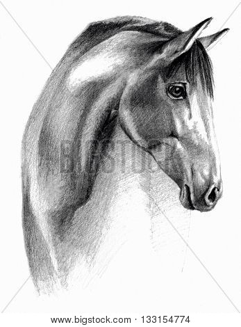 Sketch - Horse profail. On white background. Detailed pencil drawing monochrome image