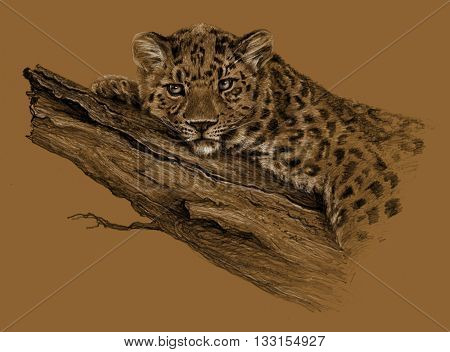 Sketch - Leopard. Leopard lying on the tree. On brown background. Detailed pencil drawing