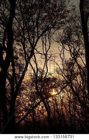 Bare tree branches twilight