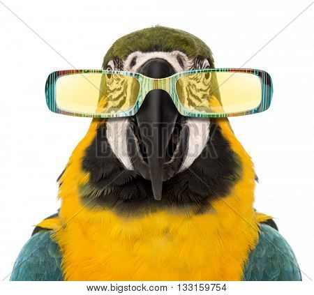 Close-up of a Blue-and-yellow Macaw, Ara ararauna wearing sunglasses, isolated on white