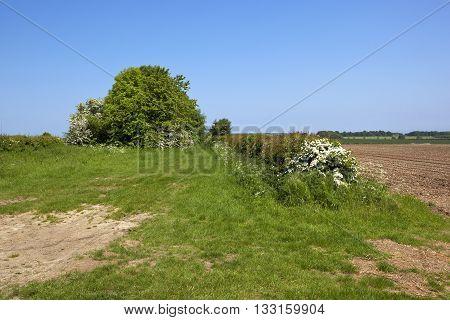 Bridleway In Summer