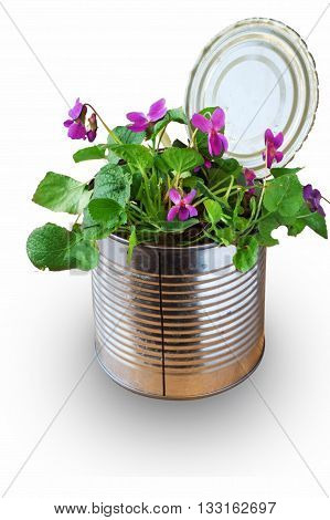Recycle of an old tin can as vase for a single flowers