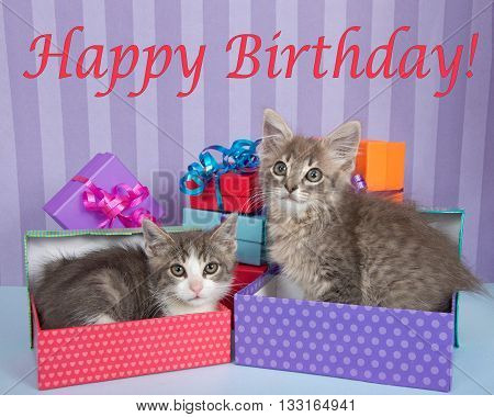 Two one month old tabby kittens one in birthday present one walking by piles of brightly colored boxes bright purple stripped background with Happy Birthday Text