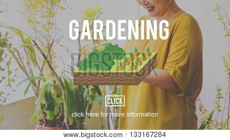 Gardening Plant Planting Farm Land Concept
