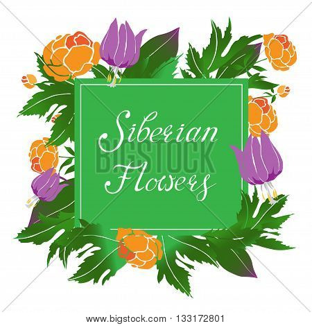 Siberian herbs and flowers vector illustration with a frame