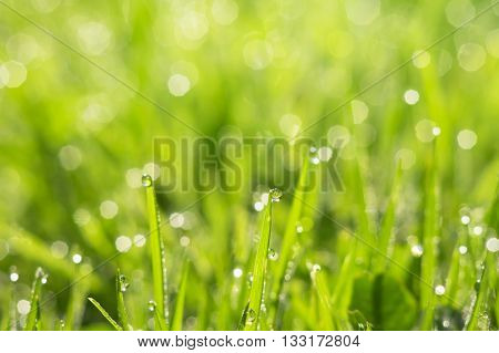 Natural summer background of grass with drops of morning dew
