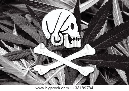 Henry Every Pirate Flag, On Cannabis Background