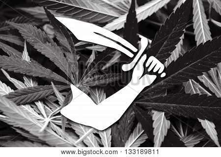 Thomas Tew Pirate Flag, On Cannabis Background