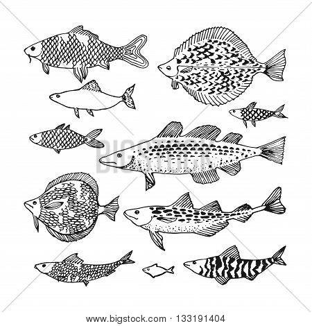 Decorative ocean fish set. Japan sea fish illustration in vector.