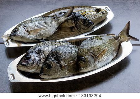 Marine fish fresh in the oval stainless steel plates on the dark background