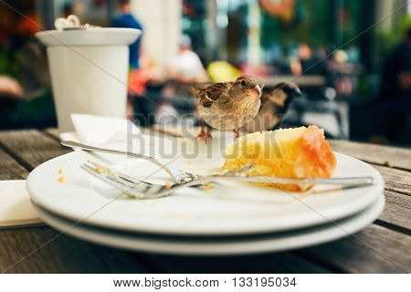 Food leftovers and hungry bird on wooden desk.