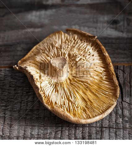 Close up of single organic dried shiitake japanese mushroom on wood background.