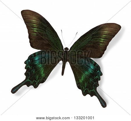 Black and green butterfly isolated on white