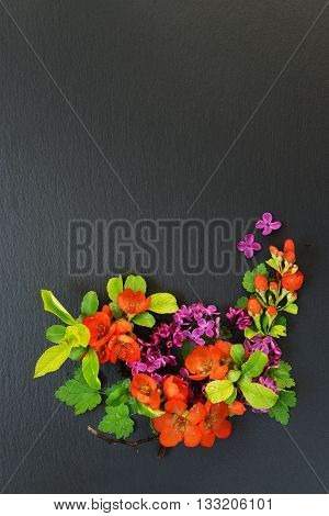 Japanese quince Chaenomeles and Lilac branches with flowers covered with water drops lie on a background of black slate; flat lay overhead view