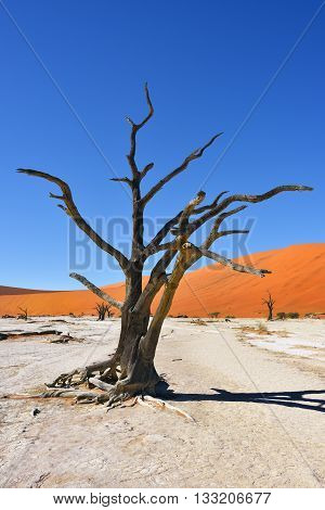 Deadvlei, Namib-naukluft National Park, Namibia, Africa