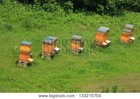 Seen on hives down from the citadel of Montreuil on sea, Pas-de-Calais, the North of France
