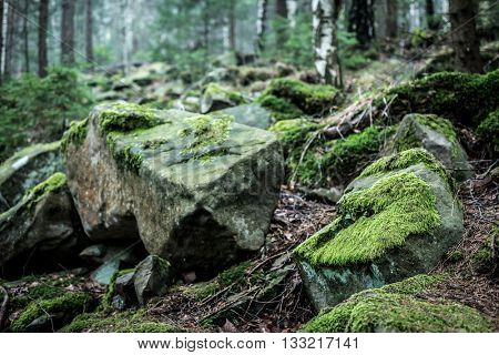 grassy stone close up in wood in Carpathian mountains
