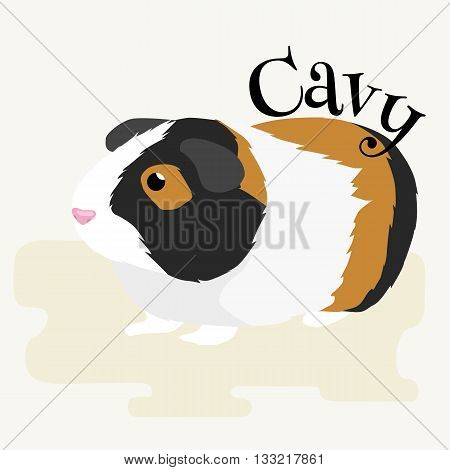 Happy Pets, home animals guinea pig on the white background vector illustration