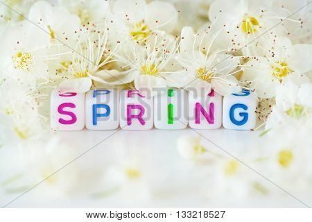 Foto of the word spring surrounding white flowers