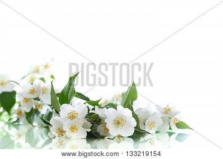 jasmine white flower isolated on white background