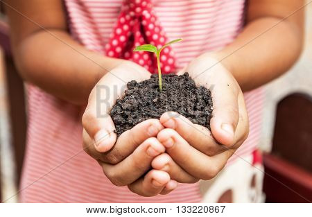 child hands holding soil with sprout tree