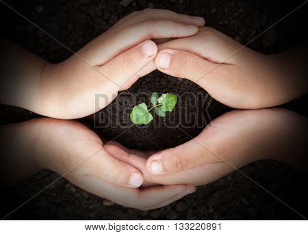 Child Hands Protect Soil With Sprout