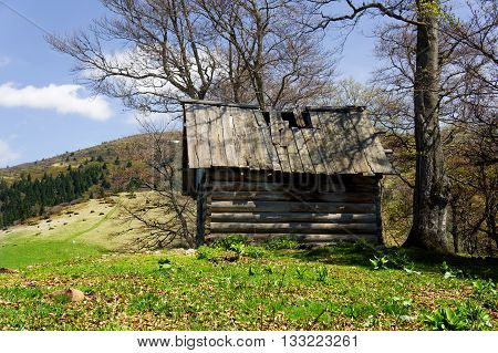 old wooden hut cabin in mountain alps at rural fall landscape