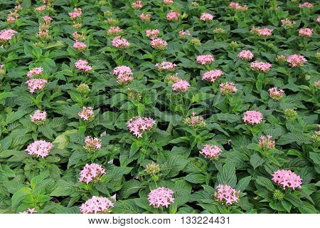 Beautiful landscape of lush plants with pinkish flowers.