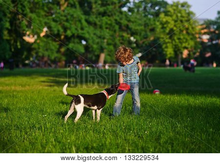 The naughty boy plays with a doggy on a green glade in park. The beautiful black-and-white dog tries to pull out frisbee from the boy's hands. They like to play together.