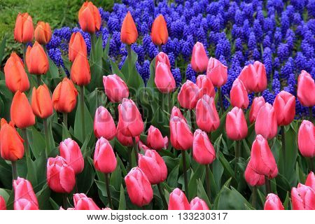 Beautiful landscaped garden with colorful tulips that welcome in Springtime.