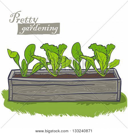 flowerpots for plants, horizontal wooden container with spinach, lettuce, seedlings