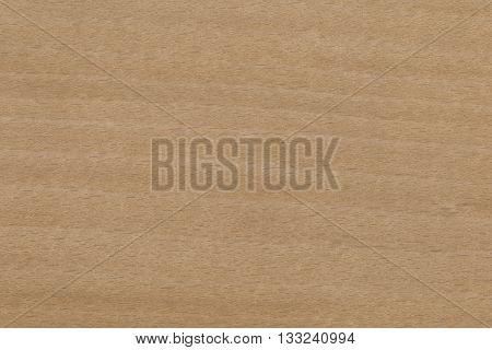 Beech (Fagus grandifolia) USA wood background texture