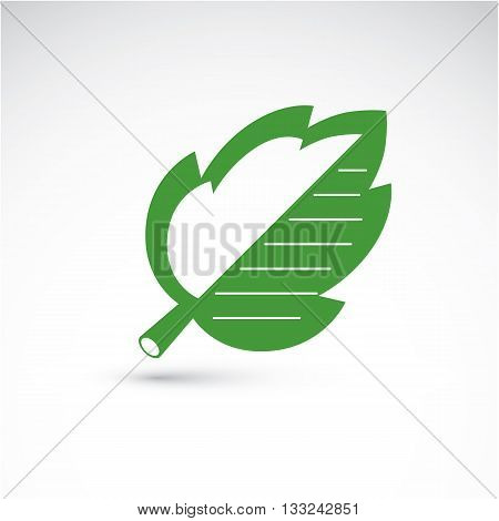 Vector Illustration Of Green Hazel Tree Leaf Isolated On White Background. Simple Drawn Nature Desig