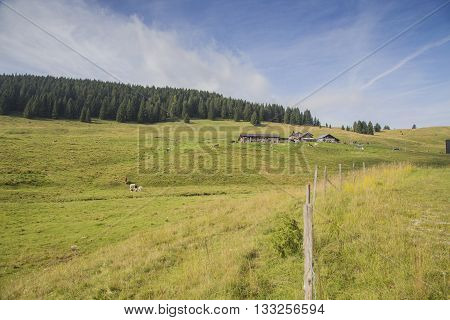 Alpine Pastures On The Asiago Plateau In Italy