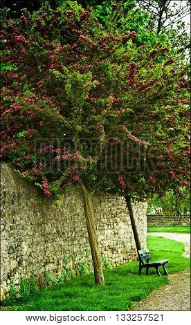 Old Alone Bench under Beauty Flowering Tree near Obsolete Stone Wall Outdoors