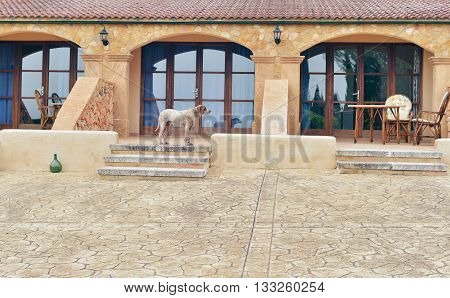 Dog standing on terrace stairs of house. Mallorca. Spain.