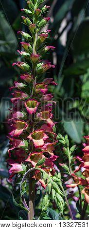 A foxglove sends a column of flowers up a single stem.