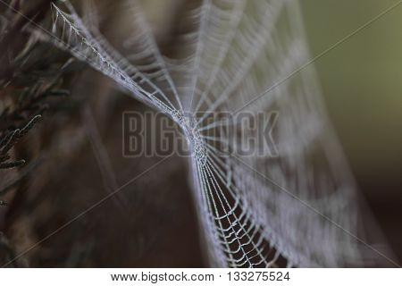 Spider web covered in water droplets -selective blur