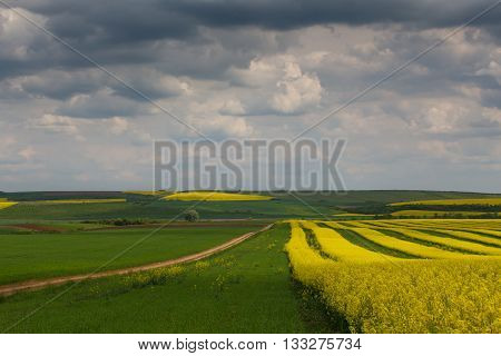 Canola fields in remote rural area in Europe