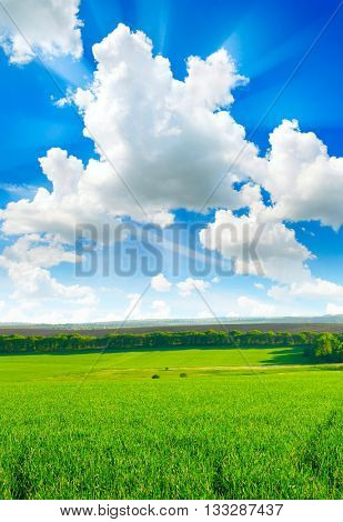 spring field and beautiful blue sky