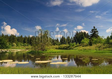 Marsh and pond at the Vogelsberg mountain range Hessen Germany